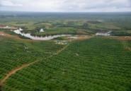 Gabon: l'Asie, moteur d'une économie émergente