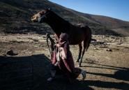 Fièvre hippique au royaume du Lesotho