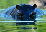 Sénégal: un hippopotame jugé dangereux abattu par des villageois