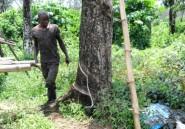 Au Liberia, le géant américain Firestone éveille colère et rancoeur