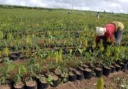 Afrique: la femme est l'avenir de l'agriculture