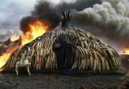 Le combat contre le braconnage se poursuit, mais la faune en paye toujours le prix