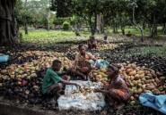 Madagascar, un cacao chic aux marges choc