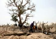 Nigeria: 6 villageois tués probablement par des éleveurs nomades
