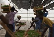 Le chômage des jeunes est un problème partout en Afrique, sauf dans un pays