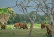 Kenya: 2 braconniers tués par des rangers dans le parc Tsavo-est