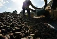 """Cacao: la chute des cours, """"bombe sociale"""" en Côte d'Ivoire"""