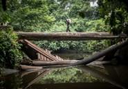 Lancement d'un Fonds bleu pour le Bassin du Congo