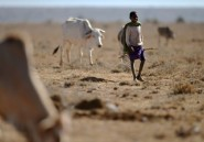 Kenya: 13 morts dans des violences entre éleveurs depuis lundi