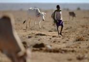 Trois millions de Kényans ont besoin d'une aide alimentaire d'urgence