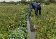 Nigeria: les agriculteurs appellent l'ONU