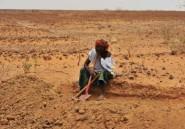 Niger: 8 migrants retrouvés morts de soif dans le désert