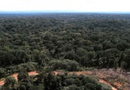 Gabon: des interpellations pour trafic de bois et d'ivoire