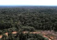 Gabon: des interpellations pour trafic de bois et d'ivoire