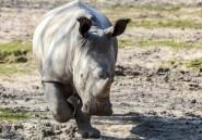 Rwanda: un spécialiste animalier hongrois tué par un rhino