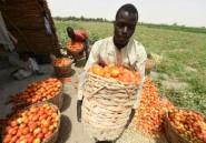 Afrique: la sécurité alimentaire menacée par l'agrobusiness