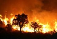 Algérie: une centaine d'incendies, 1.000 ha de forêts détruits en 48h