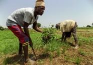 """Le Nigeria se tourne vers """"l'or blanc"""" en pleine crise économique"""