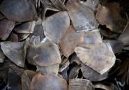 Côte d'Ivoire: saisie record de trois tonnes d'écailles de pangolin