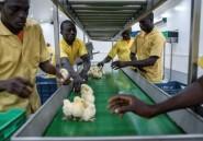 Fermiers zimbabwéens expatriés au Nigeria: les derniers vétérans produisent coûte que coûte