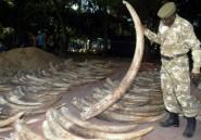 Tanzanie: 9 personnes condamnées pour possession illégale d'ivoire