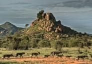 Kenya: la faune sauvage décimée par des invasions de réserves privées