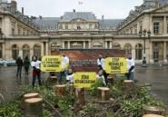 Cameroun: arrestation d'un défenseur de l'environnement
