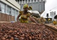 Cacao : la Côte d'Ivoire maintient inchangé le prix d'achat garanti aux producteurs pour 2017-18