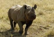 Six rhinocéros noirs sud-africains pour le Tchad