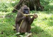 Le Nigeria s'inquiète d'une épidémie possible de variole du singe