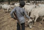 Nigeria: au moins 30 morts dans des violences intercommunautaires
