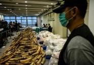 Près d'une tonne d'ivoire africain saisie au Cambodge