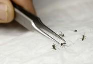 A Sao Tome, le paludisme ne tue plus