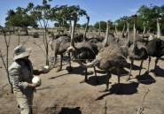 Tanzanie: 25 ans de prison pour trafic d'