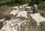 Le Nigeria, nouvelle plaque tournante du commerce de peau d'âne
