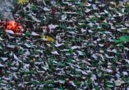 Jérusalem: enquête en Algérie après une banderole antisaoudienne dans un stade