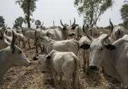 Nigeria: manifestations contre des tueries perpétrées par des éleveurs nomades