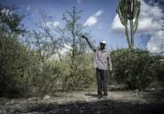 Au Zimbabwe, l'ombre des tueries de Gukurahundi plane sur le nouveau pouvoir
