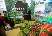 L'Afrique toujours en proie