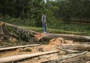 RDC: réattribution de concessions forestières