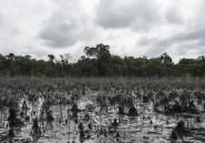 Pollution et marées noires au Nigeria: Amnesty accuse Shell et ENI