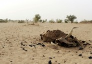 Conflits et sécheresse: la famine a encore avancé