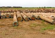 Bois de guerre au Liberia: reprise de l'instruction visant DLH