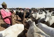 Violences pastorales au Nigeria: les médias rappelés