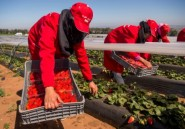 """Maroc: campagne agricole """"favorable"""", un vecteur de croissance"""