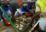 Dans l'Angola pétrolier en crise, le rêve de la diversification par la pêche