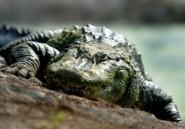 Un crocodile lui dévore un bras, elle se marie