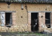 Burundi: dix ânes financés par la France courroucent le pouvoir