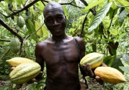 Le Nigeria veut ressusciter la filière cacao