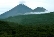 Exploitation illégale de bois en RDC: une ONG demande